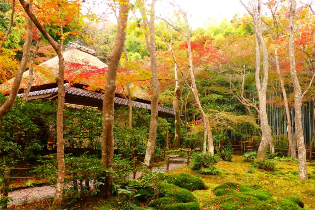 京都市右京区嵯峨(嵐山)にある祇王寺の苔庭と紅葉(秋・11月)