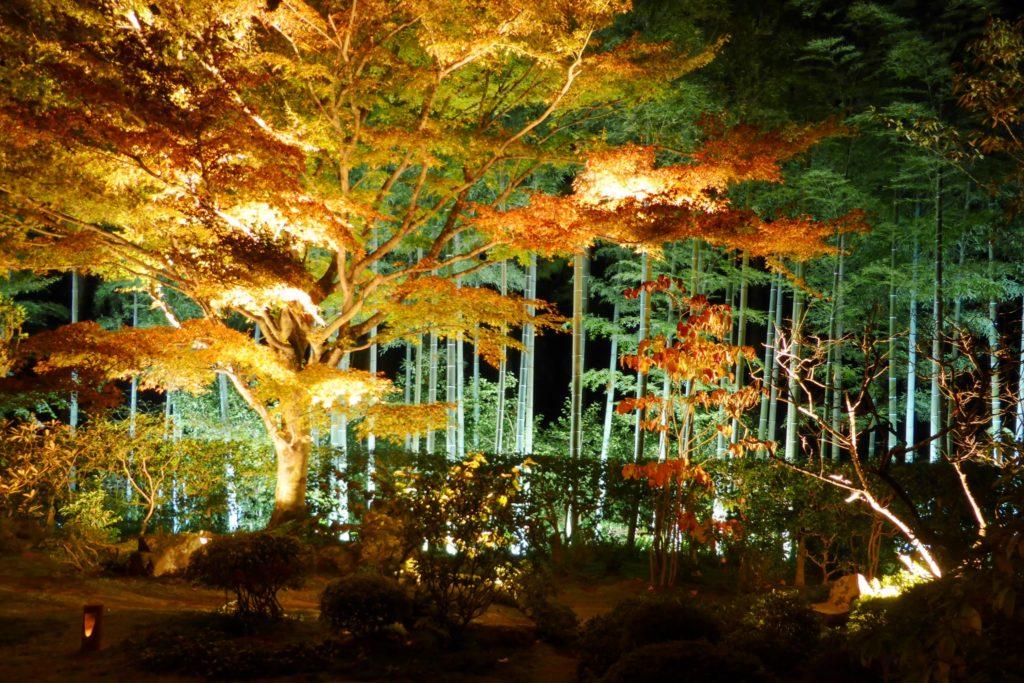 京都市左京区大原にある宝泉院の盤桓園(ライトアップ)(秋・11月)