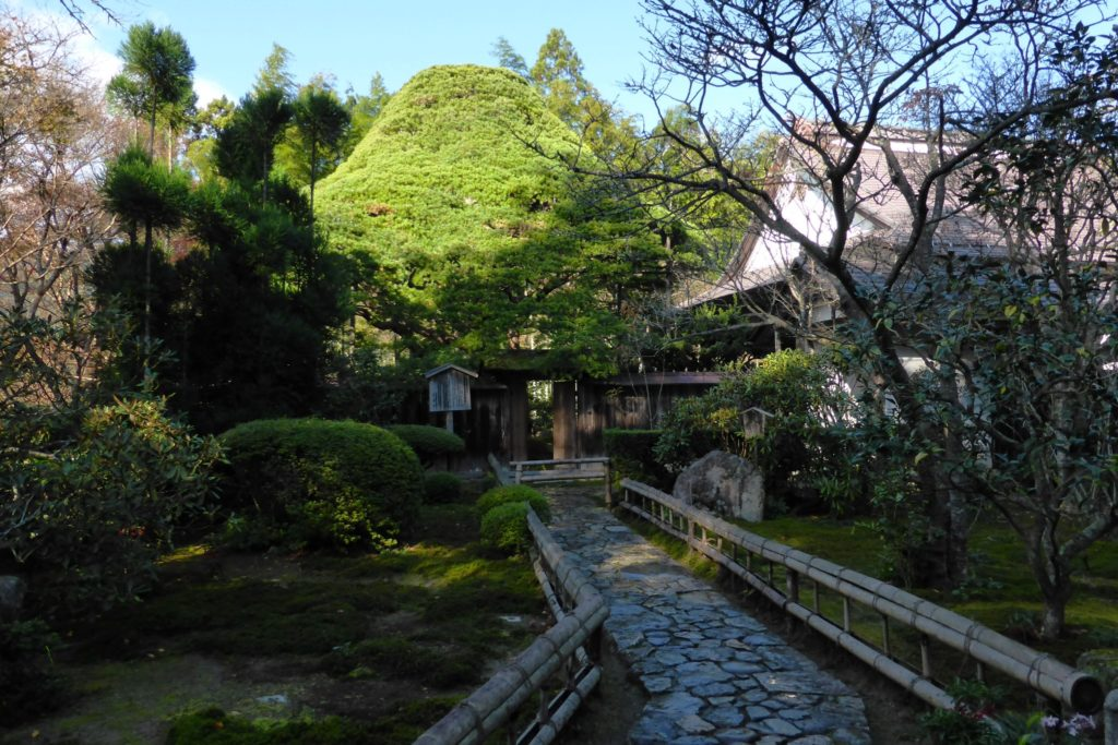 京都市左京区大原にある宝泉院の境内と五葉の松(秋・11月)