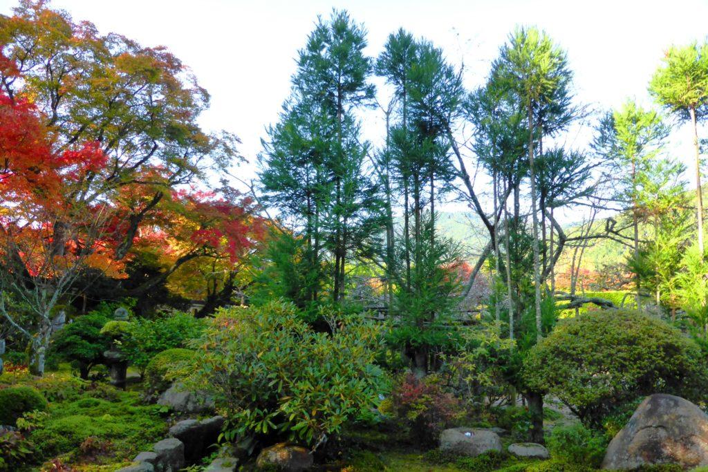 京都市左京区大原にある実光院の庭園の紅葉(秋・11月)
