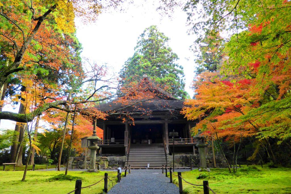 京都市左京区大原にある三千院の往生極楽院と苔庭と紅葉(秋・11月)