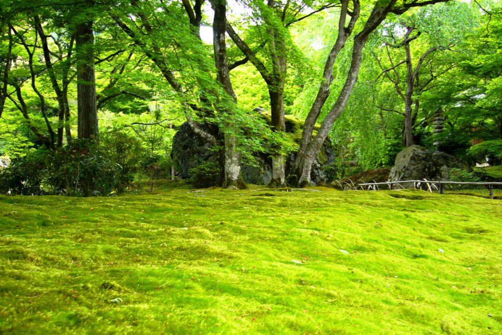 京都市右京区嵯峨(嵐山)にある宝厳院の獅子吼の庭の苔庭(春・5月)