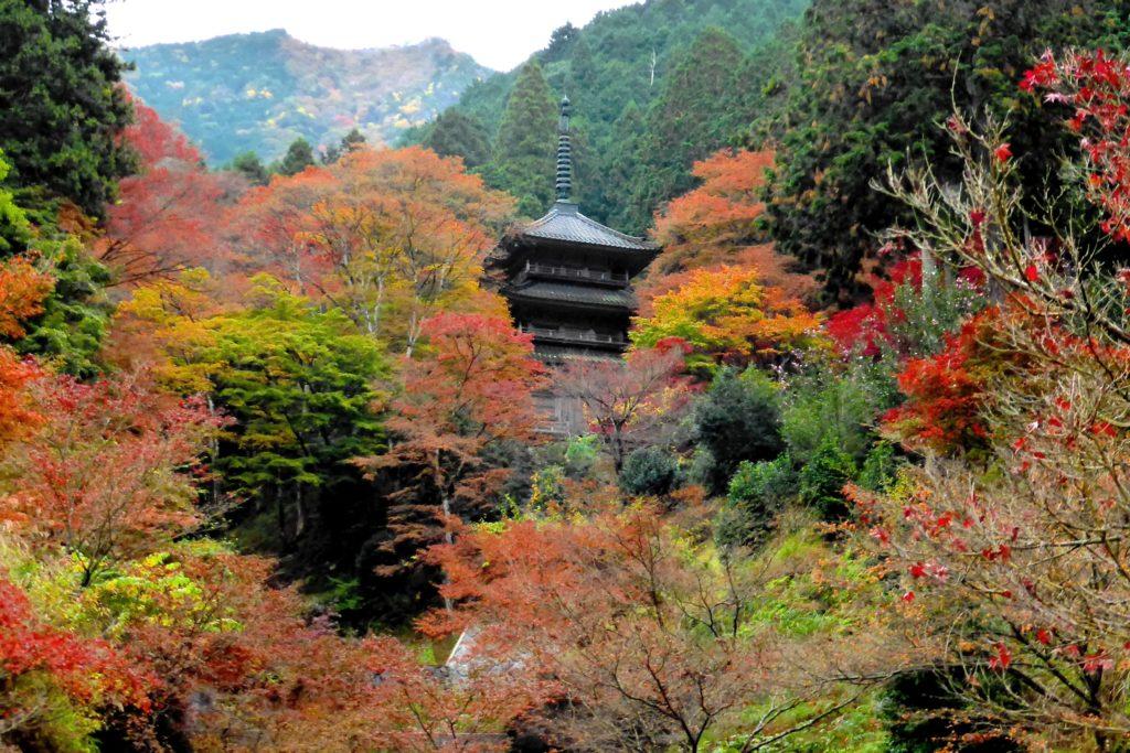 兵庫県丹波市にある高源寺の多宝塔と紅葉(秋・11月)