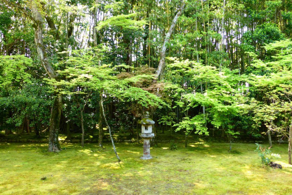 京都市北区にある高桐院の庭(春・4月)