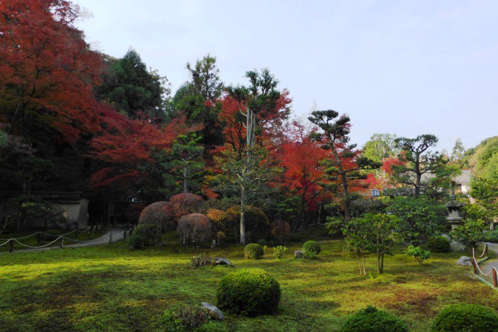 京都市東山区にある即宗院の庭園の紅葉と苔庭(秋・11月)