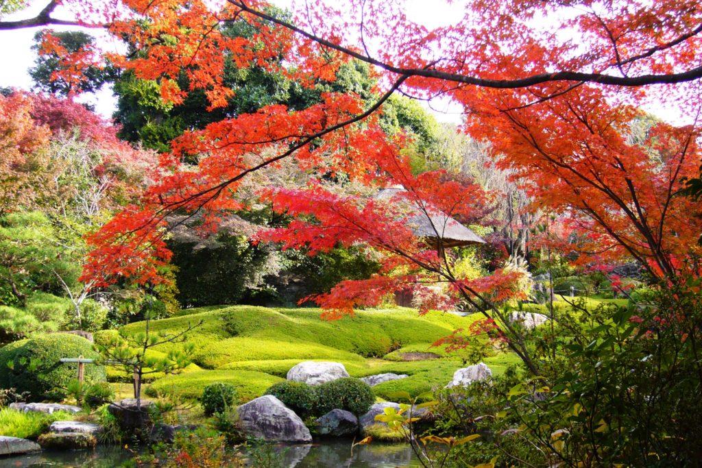京都市右京区にある退蔵院の池泉回遊式庭園である余香苑の紅葉(秋・11月)