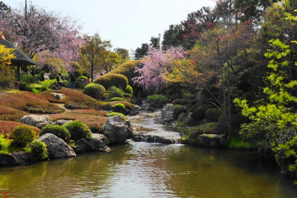 京都市右京区にある退蔵院の池泉回遊式庭園である余香苑の桜(春・4月)