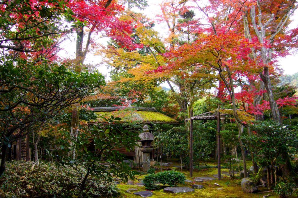京都市右京区にある大法院の庭園の苔庭と紅葉(秋・11月)