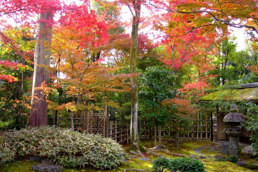 京都市右京区にある大法院の庭園