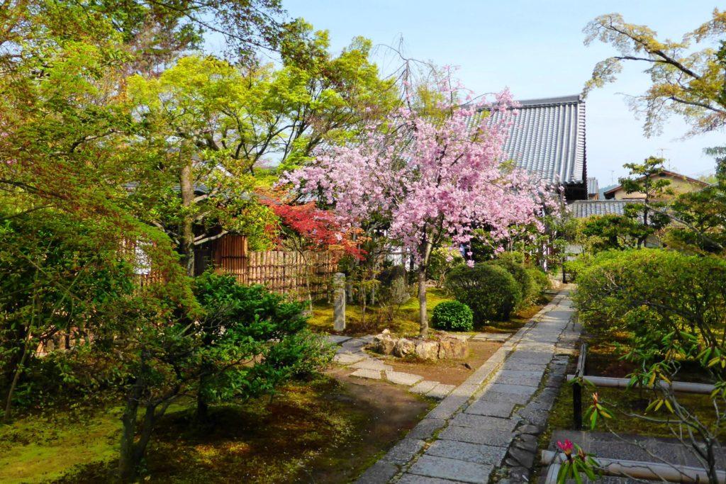 京都市右京区にある大法院の境内の桜(春・4月)