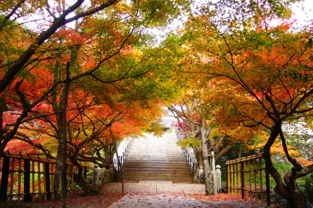 兵庫県丹波市にある円通寺の境内の紅葉(秋・11月)