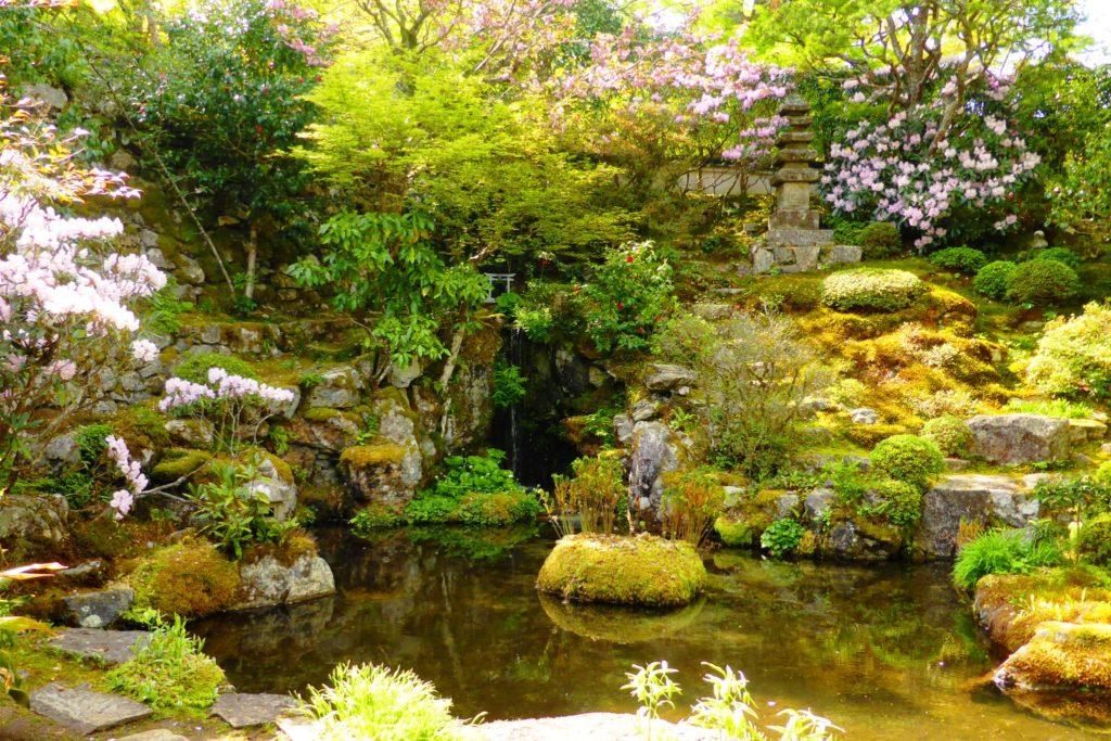 京都市左京区大原にある実光院の契心園と石楠花(春・4月)