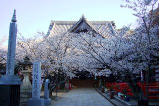 和歌山市にある紀三井寺の本堂と桜