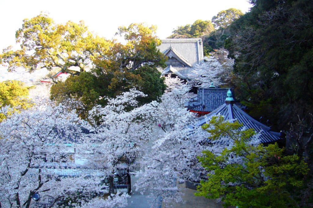 和歌山市にある紀三井寺の境内と桜(春・4月)