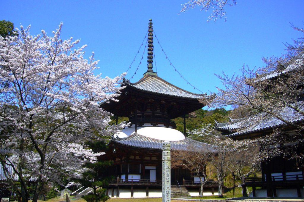 和歌山県岩出市にある根来寺の大塔と桜(春・4月)