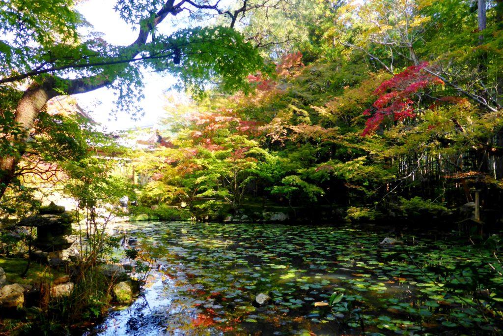 京都市左京区にある天授庵の庭園の紅葉(秋・11月)