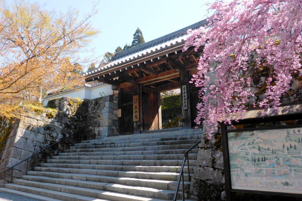 京都市左京区大原にある三千院の山門と桜(春・4月)