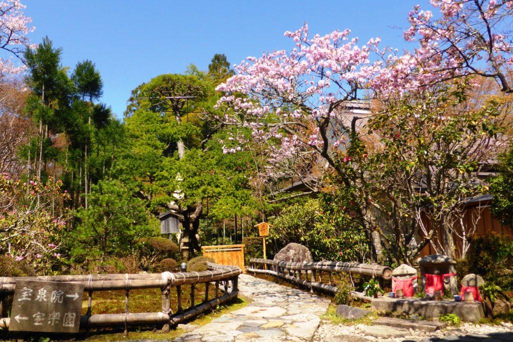 京都市左京区大原にある宝泉院の境内と桜(春・4月)