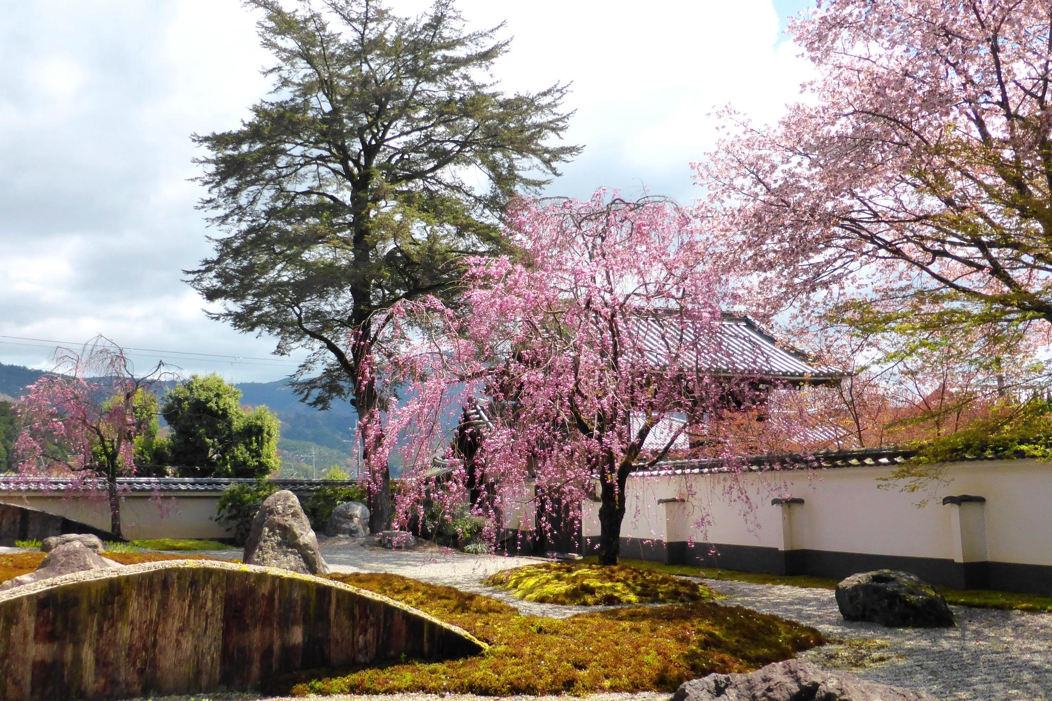 京都市左京区の実相院の庭