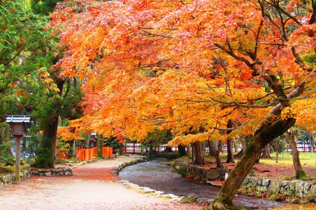 京都市北区にある上賀茂神社の境内の紅葉(秋・11月)