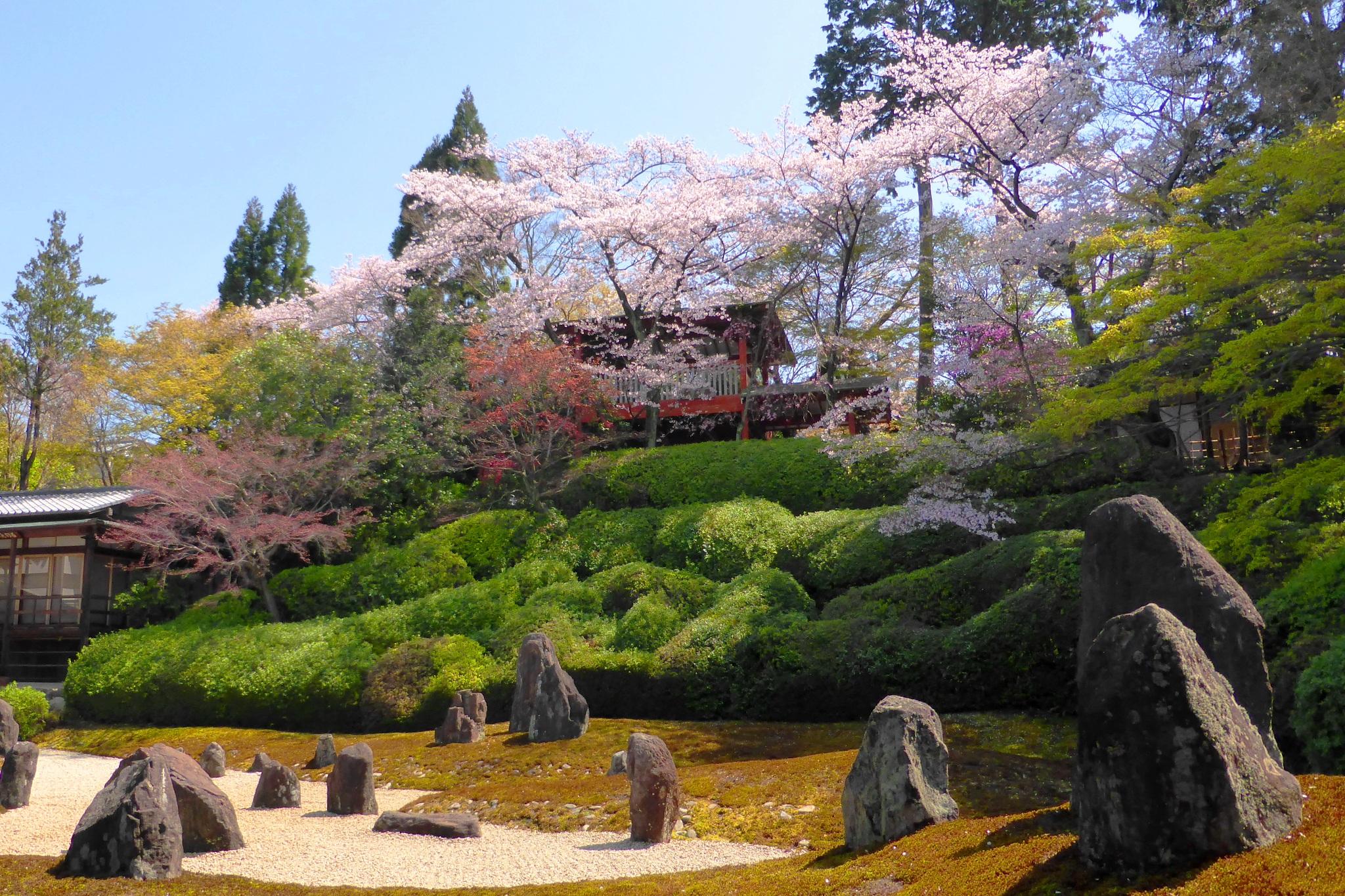 京都市東山区にある光明院の波心庭と桜