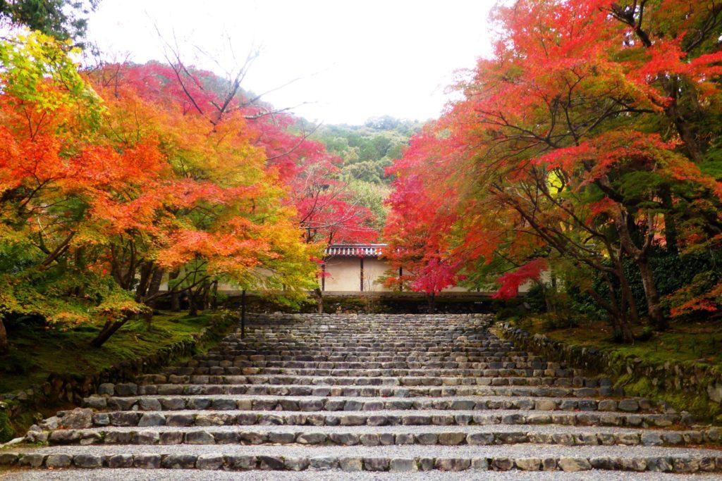 京都市右京区にある二尊院の参道と紅葉(秋・11月)