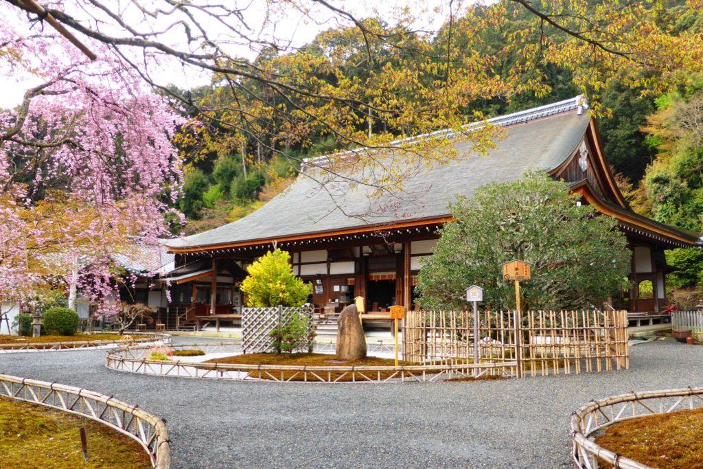 京都市右京区にある二尊院の本堂と桜(春・4月)