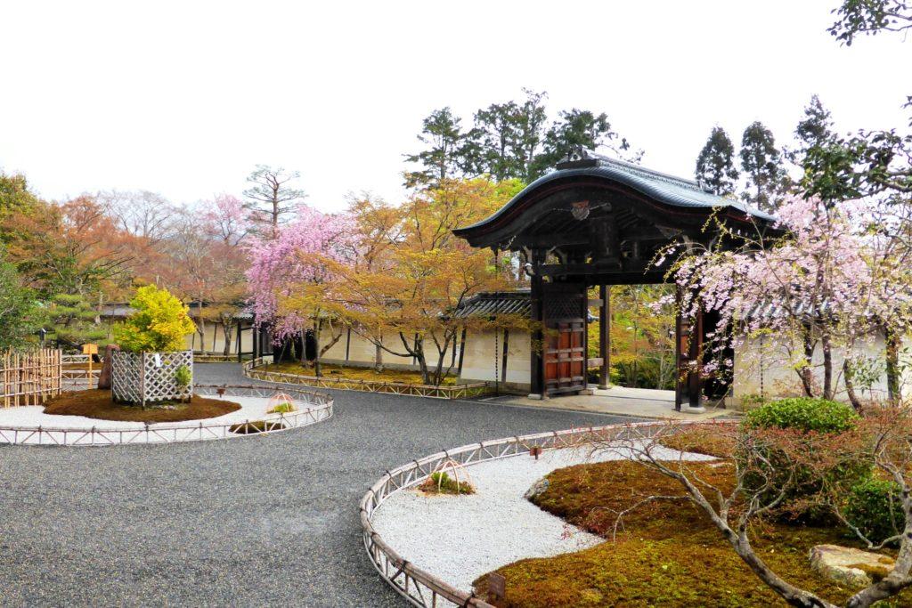 京都市右京区にある二尊院の境内の桜(春・4月)