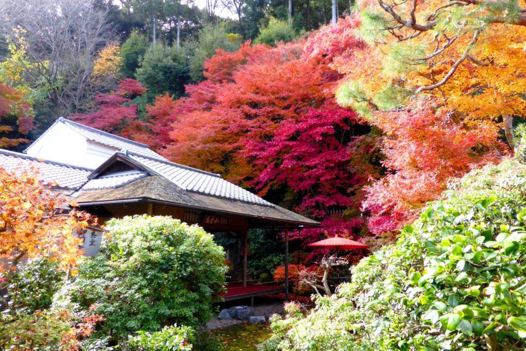 京都市右京区にある二尊院の茶室と紅葉(秋・11月)