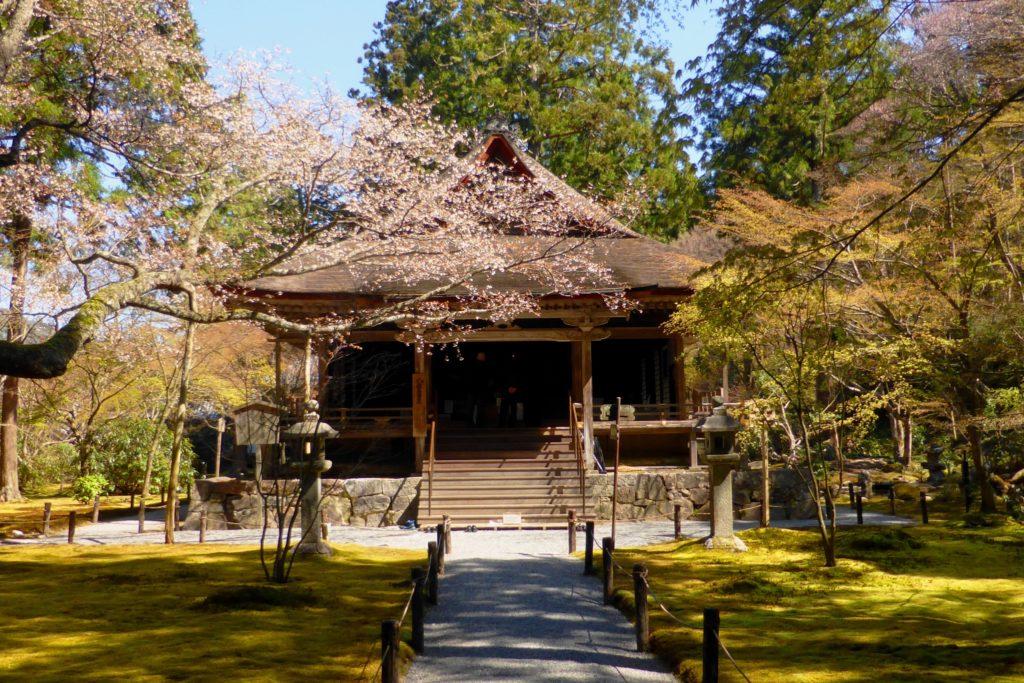 京都市左京区大原にある三千院の往生極楽院と桜と苔庭(春・4月)
