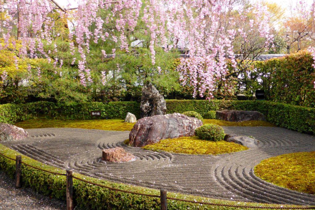 京都市右京区にある退蔵院の陰の庭と桜(春・4月)