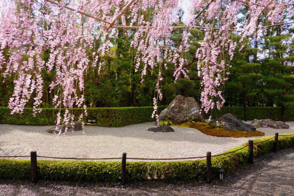 京都市右京区にある退蔵院の陽の庭と桜(春・4月)