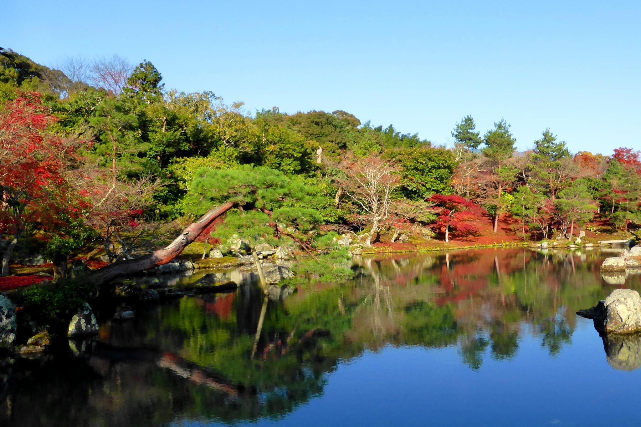 京都市右京区嵯峨(嵐山)にある天龍寺の曹源池庭園と紅葉