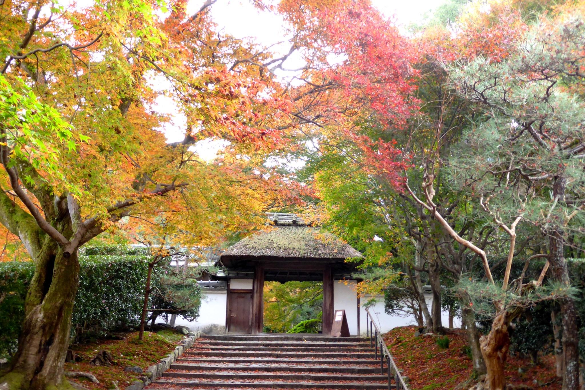 京都市左京区にある安楽寺の山門と紅葉