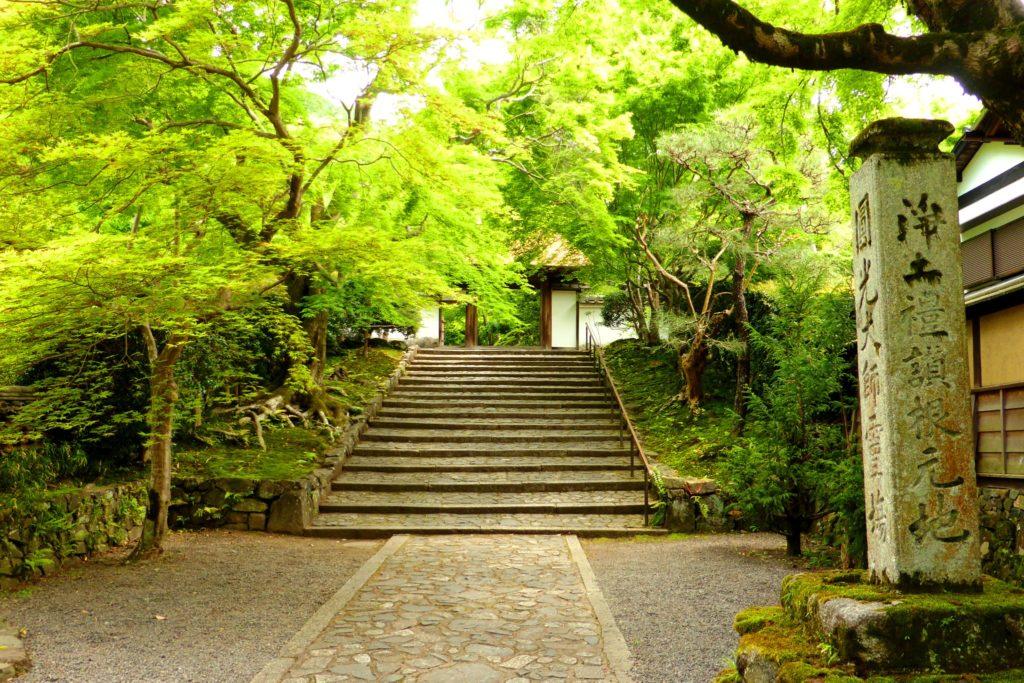 京都市左京区にある安楽寺の山門と青もみじ(春・5月)
