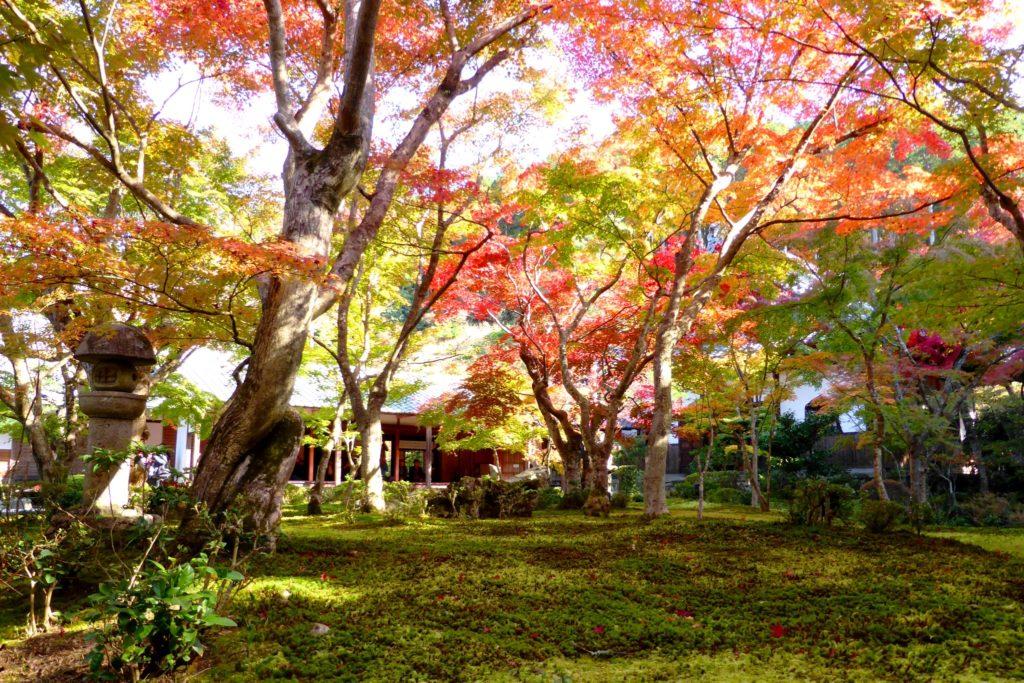 京都市左京区にある圓光寺の十牛之庭の苔庭と紅葉
