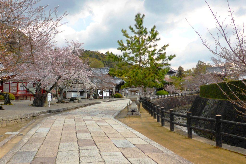 和歌山県紀の川市にある粉河寺の参道と桜(春・4月)