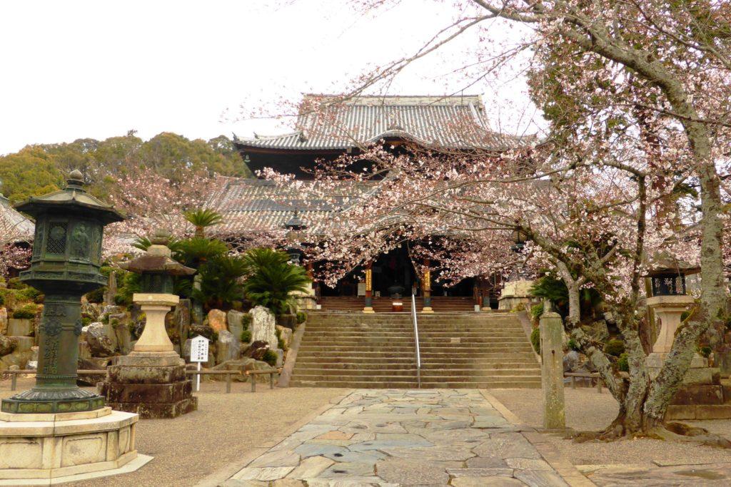 和歌山県紀の川市にある粉河寺の本堂と桜(春・4月)