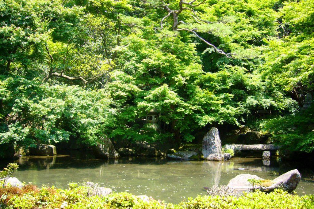 京都市左京区にある蓮華寺の庭園の青もみじ(夏・6月)
