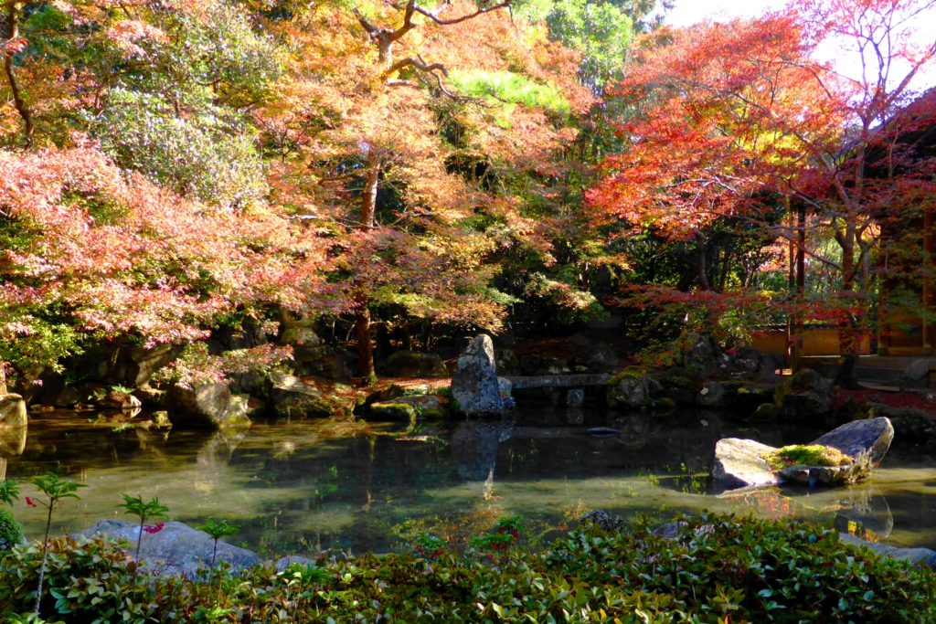 京都市左京区にある蓮華寺の庭園の紅葉(秋・11月)