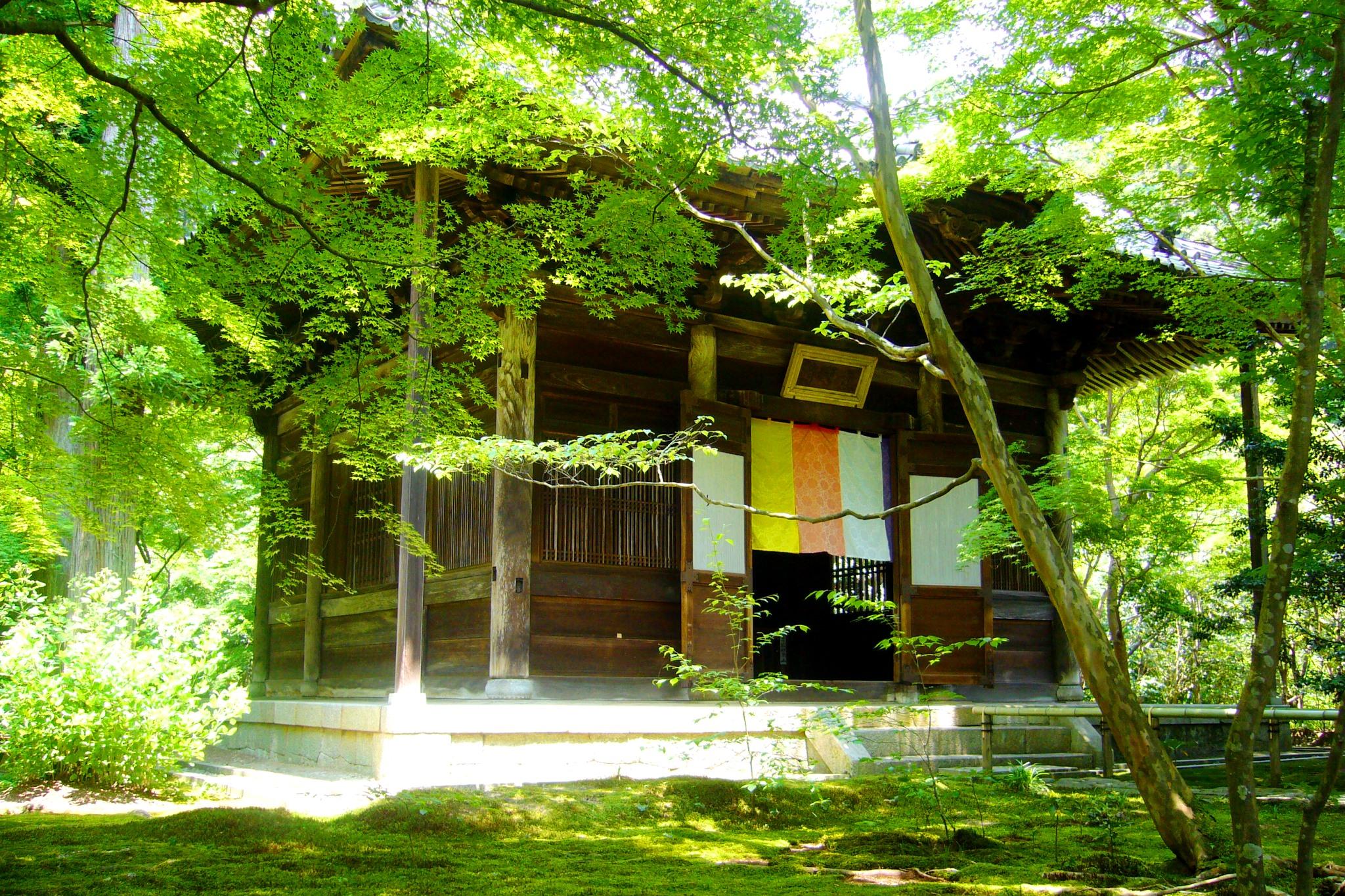 京都市左京区にある蓮華寺の本堂と青もみじ