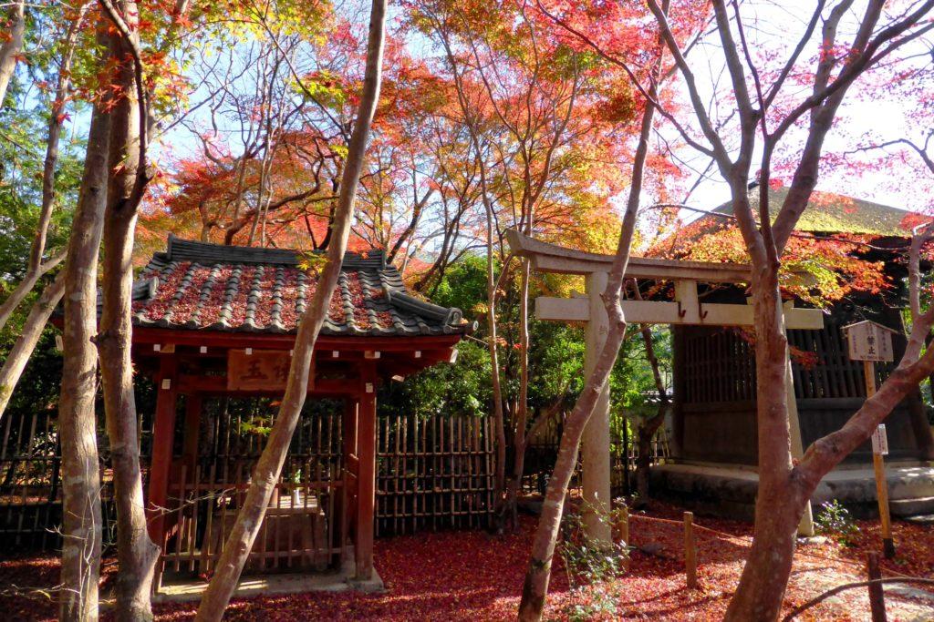 京都市左京区にある蓮華寺の境内の紅葉(秋・11月)