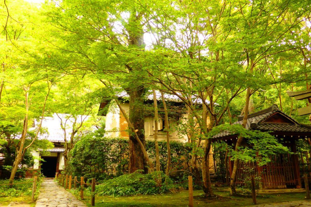 京都市左京区にある蓮華寺の境内の青もみじ(秋・10月)