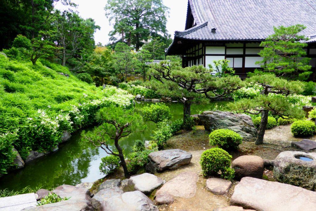 京都市東山区にある両足院の庭園の半夏生