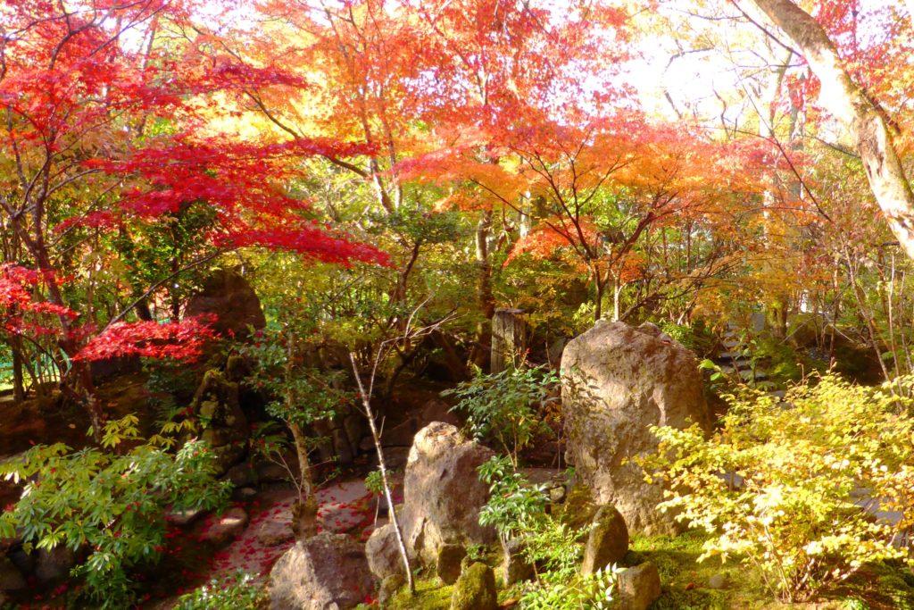 京都市左京区大原にある宝泉院の宝楽園の紅葉(秋・11月)